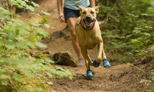 Get Your Pup Ready For Spring Adventures With Gear Designed For Dogs